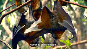 Lobby Its Victors Fault Bat Image Stock Footage Funny Ads Archive