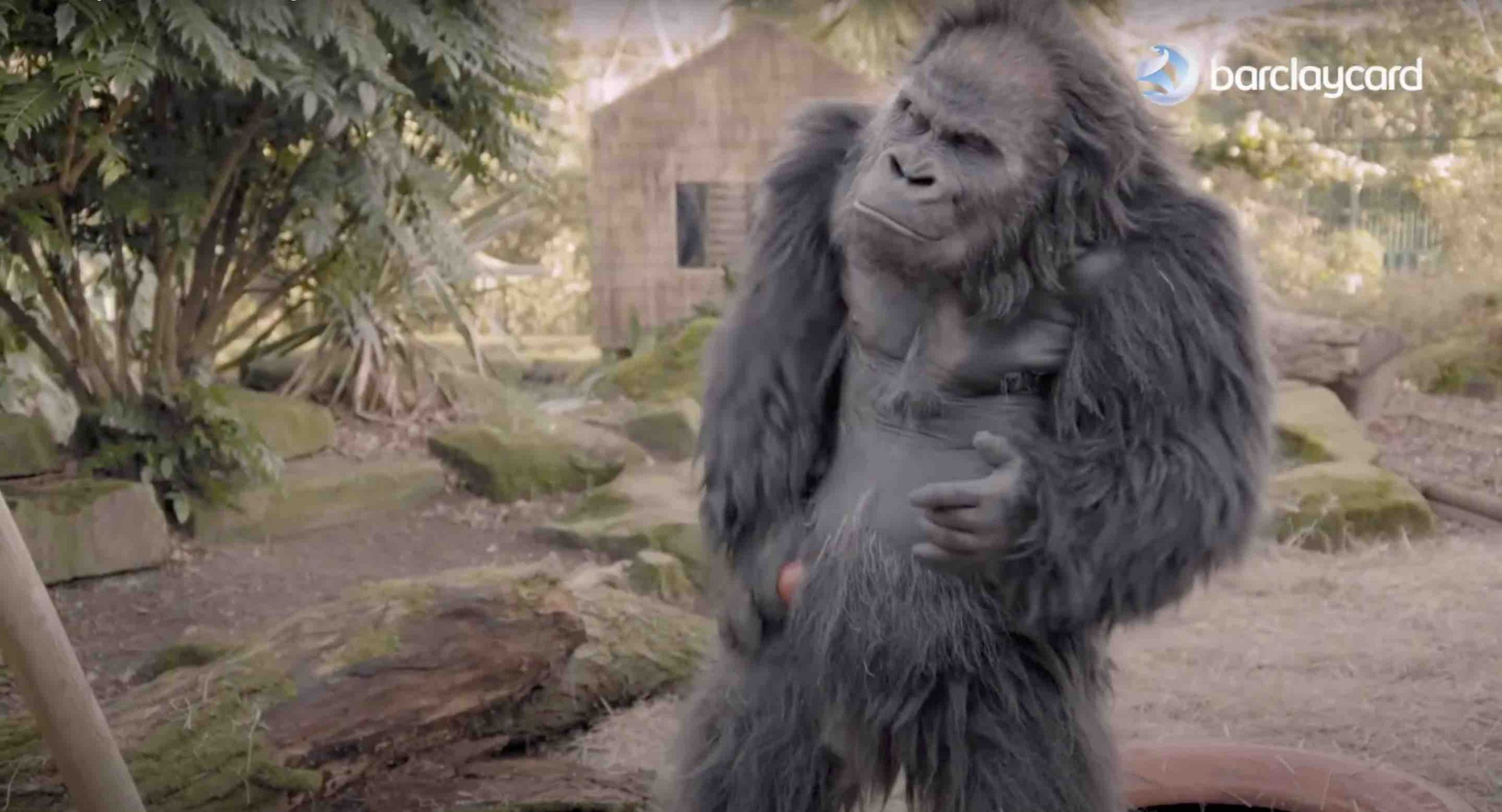 Barclaycard's new funny advert features gorillas playing pranks.
